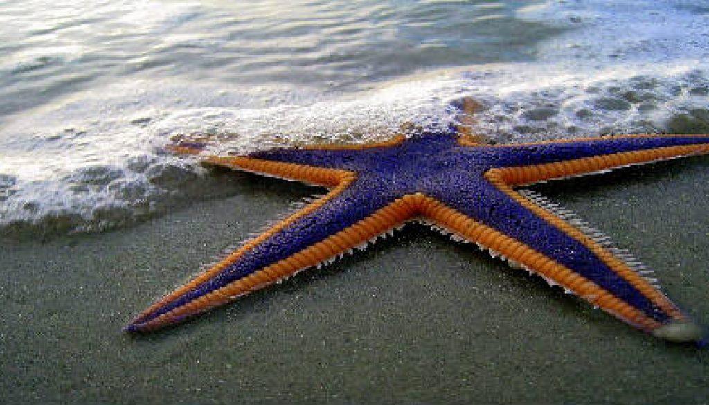 bluestarfishhome