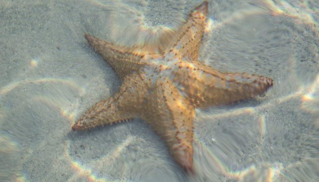 StarfishOZ, Featured Image